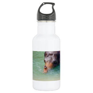 Elephant Trunk Up In Water, Animal Photography Water Bottle