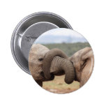 elephant trunks tied up buttons