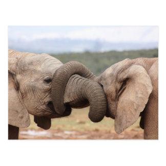 elephant trunks tied up postcard