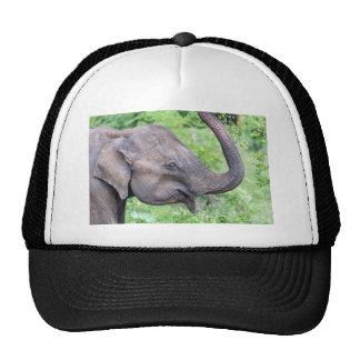 Elephant, Udawalawe, Sri Lanka Trucker Hat