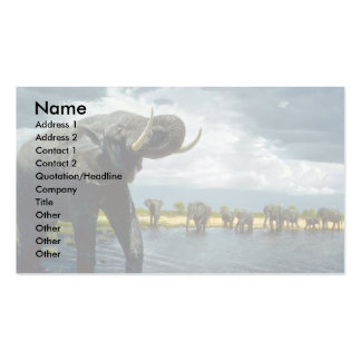 Elephant walk Double-Sided standard business cards (Pack of 100)