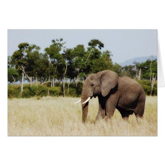 Elephant walking Masai Mara Plains, Kenya card