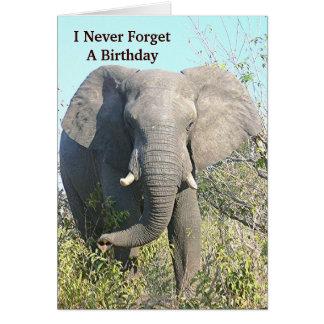 ELEPHANT WALKING TOWARD CAMERA CARD