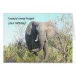 ELEPHANT WALKING TOWARD CAMERA CARDS