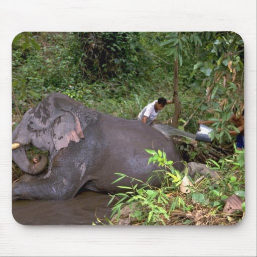 Elephant washing in river, Northern Thailand Mouse Pad