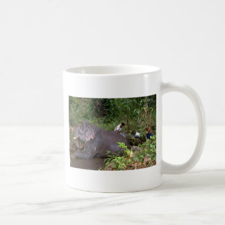 Elephant washing in river, Northern Thailand Coffee Mugs