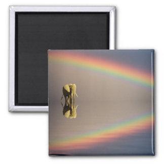 Elephant, water, and rainbow, Kenya Magnet