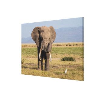 Elephant Waving its Trunk Canvas Print