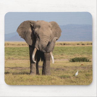 Elephant Waving its Trunk Mouse Pad