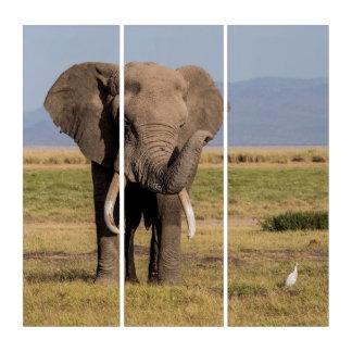 Elephant Waving its Trunk Triptych