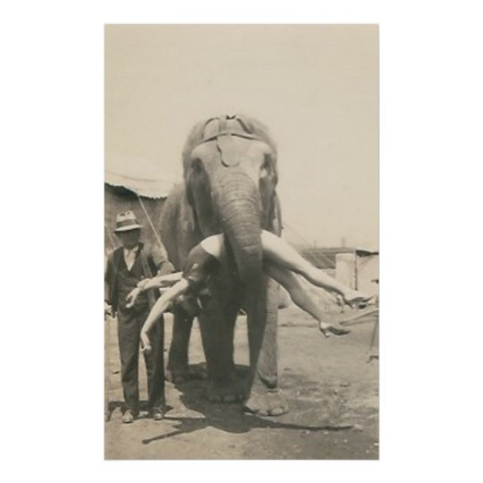 elephant with girl in mouth poster