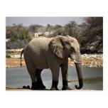 Elephant with mud socks postcard