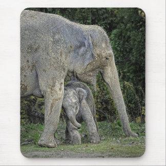 Elephant With Newborn Mousepad