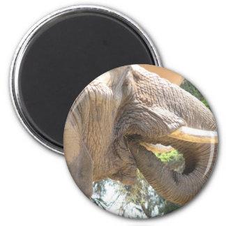 Elephant with Tusks Magnet Refrigerator Magnet