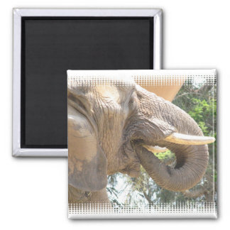 Elephant with Tusks Square Magnet Fridge Magnets