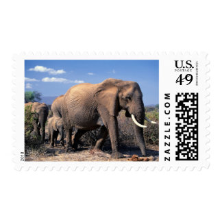 Elephant with young in the wild postage stamp