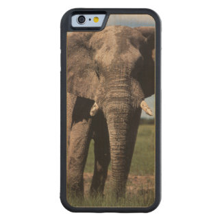 Elephant young male carved maple iPhone 6 bumper case