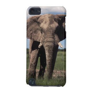 Elephant young male iPod touch (5th generation) cases
