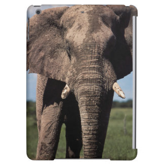 Elephant young male iPad air cases