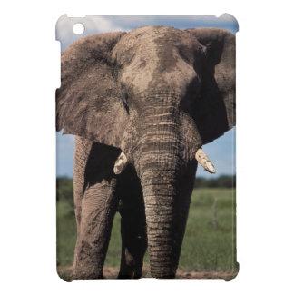 Elephant young male iPad mini cases