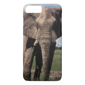Elephant young male iPhone 8 plus/7 plus case
