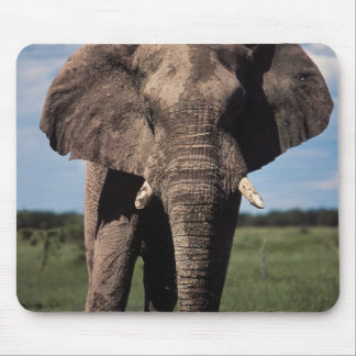 Elephant young male mouse pad