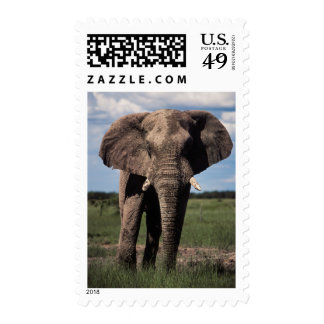Elephant young male stamp