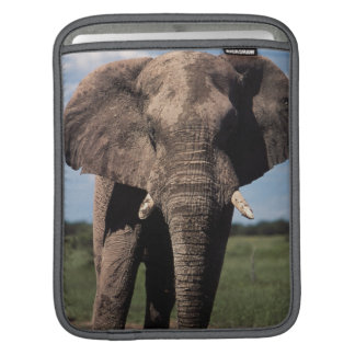 Elephant young male sleeves for iPads