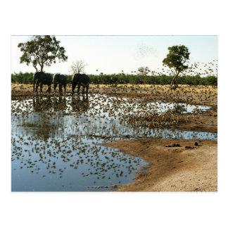 Elephants and Birds 2 postacrd Postcard