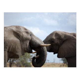 Elephants at Kruger Postcard
