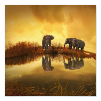 Elephants at Orange Sunset Picture Personalized Announcement