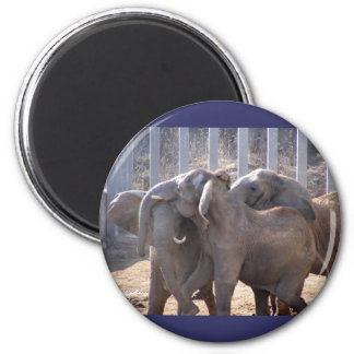 Elephants at Play Magnet