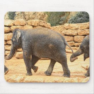 Elephants at the Jerusalem Biblical Zoo Mouse Pad