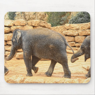 Elephants at the Jerusalem Biblical Zoo Mouse Pads