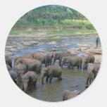 Elephants bathing in river Sri Lanka Classic Round Sticker