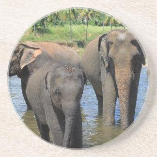 Elephants bathing in river Sri Lanka Drink Coasters