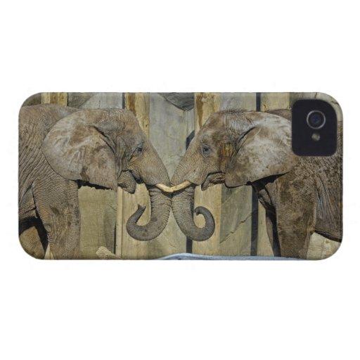 Elephants Best Friends Embrace iPhone 4 Cases