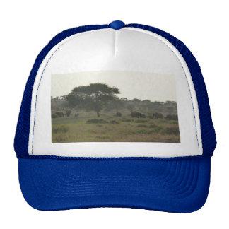 Elephants Cap, African Safari Collection Trucker Hats