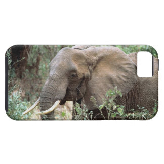 ELEPHANTS iPhone 5 CASES