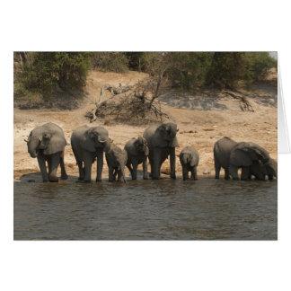 Elephants Drinking from Chobe River Card