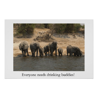 Elephants Drinking from Chobe River Poster
