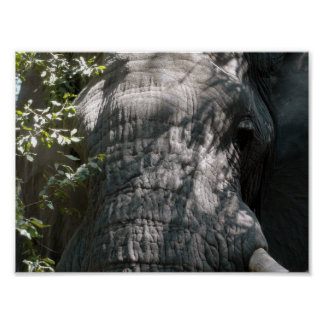 Elephant's face poster