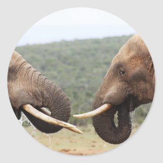 elephants face to face classic round sticker