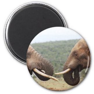 elephants face to face magnet