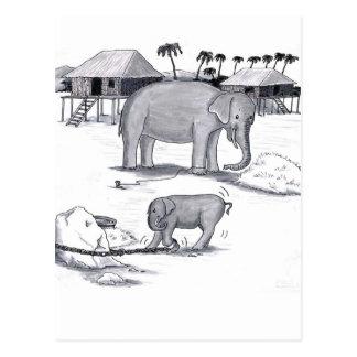 Elephants Held Captive Postcard