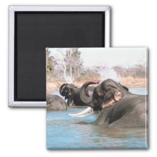 Elephants Immersed 2 Inch Square Magnet