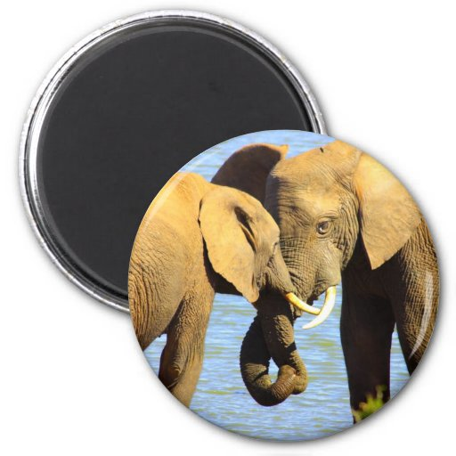 elephants in love 2 inch round magnet