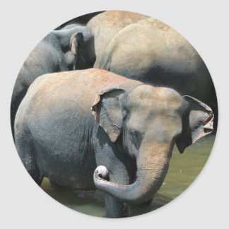 Elephants in river Sri Lanka Classic Round Sticker