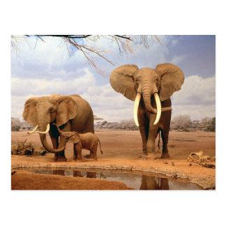 Elephants in the desert postcard
