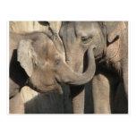 Elephants Post Card